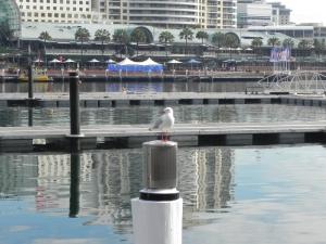 Australien 2013_10